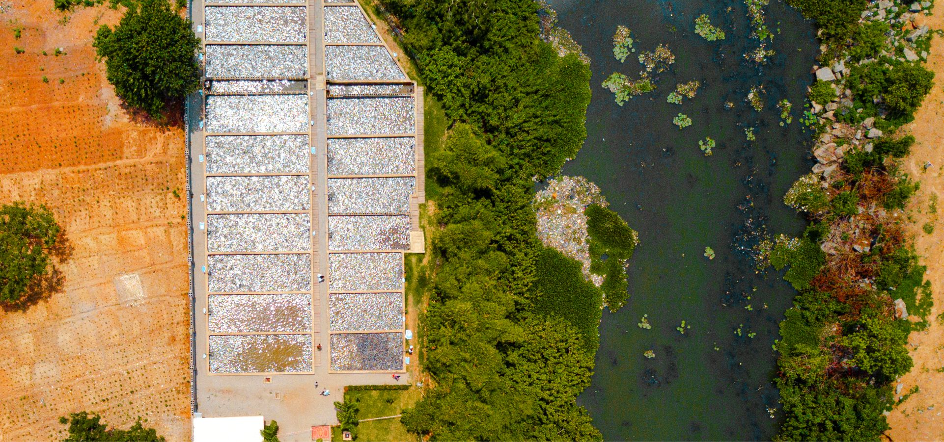How to start a fish farm in Nigeria