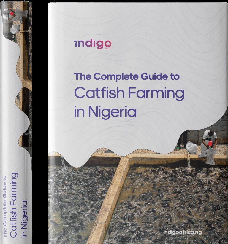 Guide to Catfish Farming in Nigeria